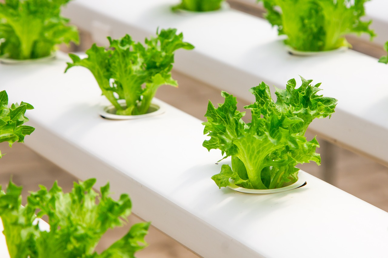 What You Need to Know about Hydroponic Farms in the Middle East