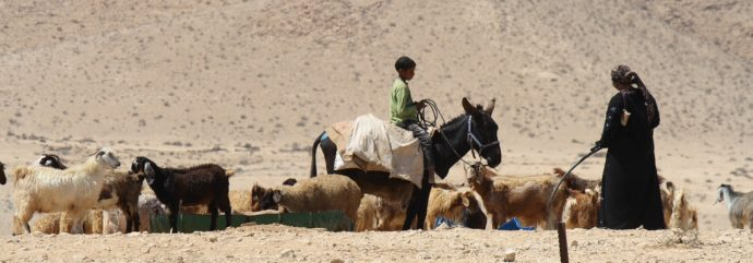 Spotlight – How Are Egyptian Farmers Growing Food in the Desert?