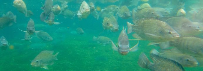 Egypt to Build Largest Fish Farm in the Middle East
