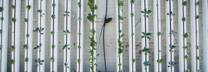 This Is What You Need to Know about Vertical Farms