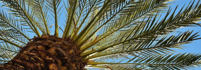 Finding New Ways to Make Fuel from Date Palm Waste