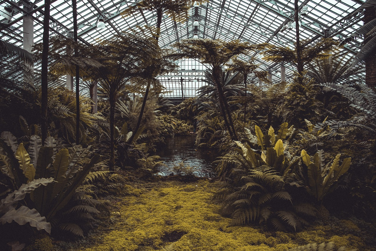 Growing in Glasshouses: Innovative New Farming Projects