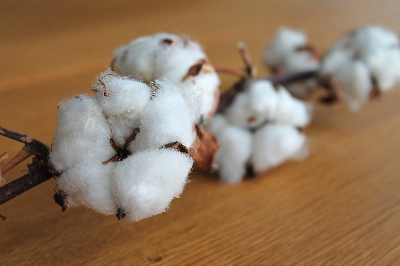 Spotlight on the Revival of Afghanistan's Cotton Industry