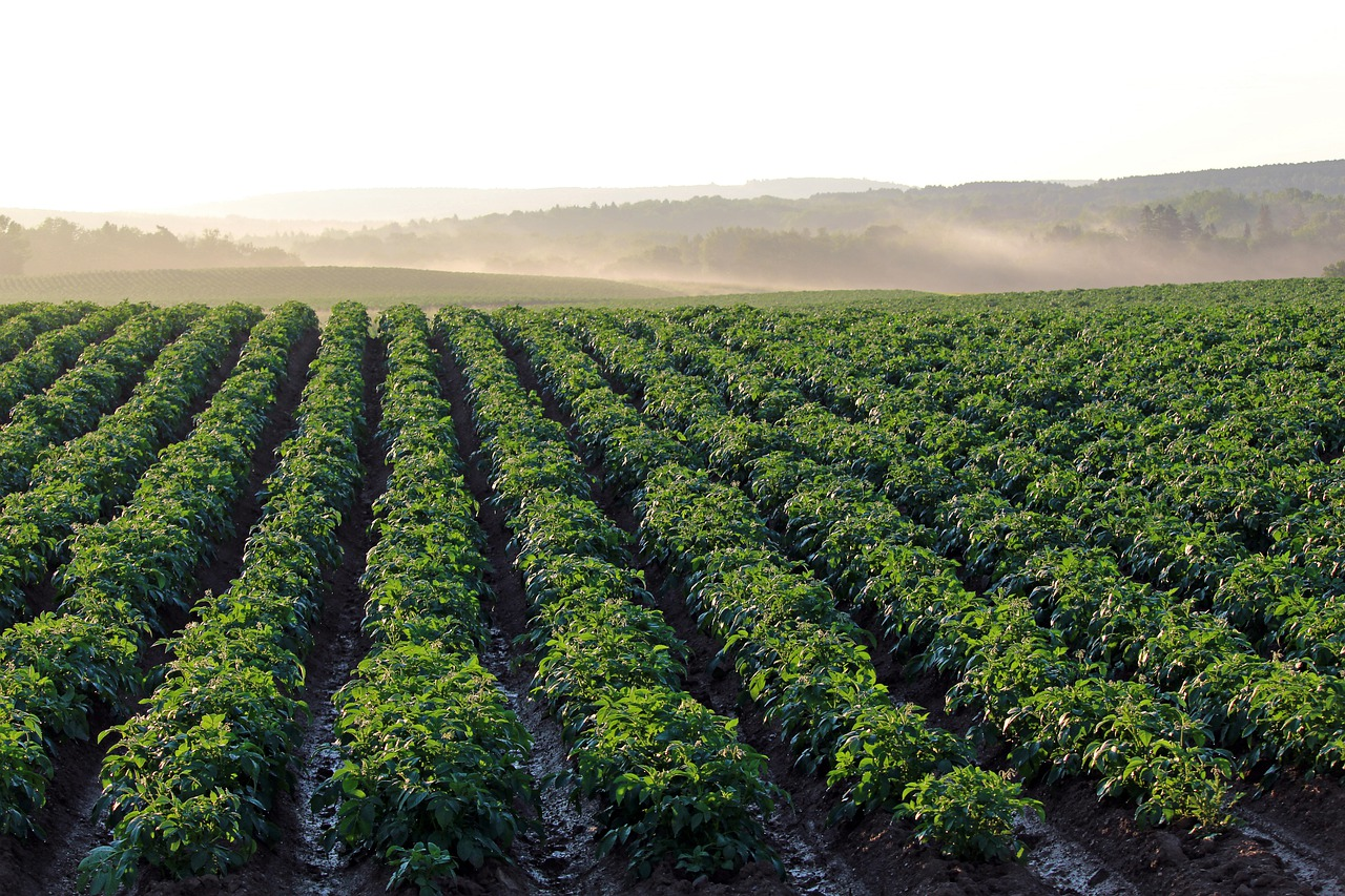 This Is How Improved Irrigation Can Save Crops from Climate Change